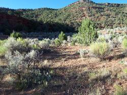 Mid-elevation Loamy Bottom (Basin Big Sagebrush)