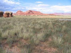 Low Elevation Semidesert Sandy Loam (Fourwing saltbush)