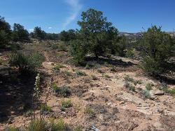 Mid-elevation Upland Shallow Loam (Pinyon - Utah Juniper)