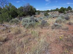 Upland Shallow Loam (Pinyon - Utah Juniper)