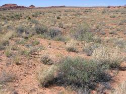 Low Elevation Semidesert Sand (Fourwing saltbush)